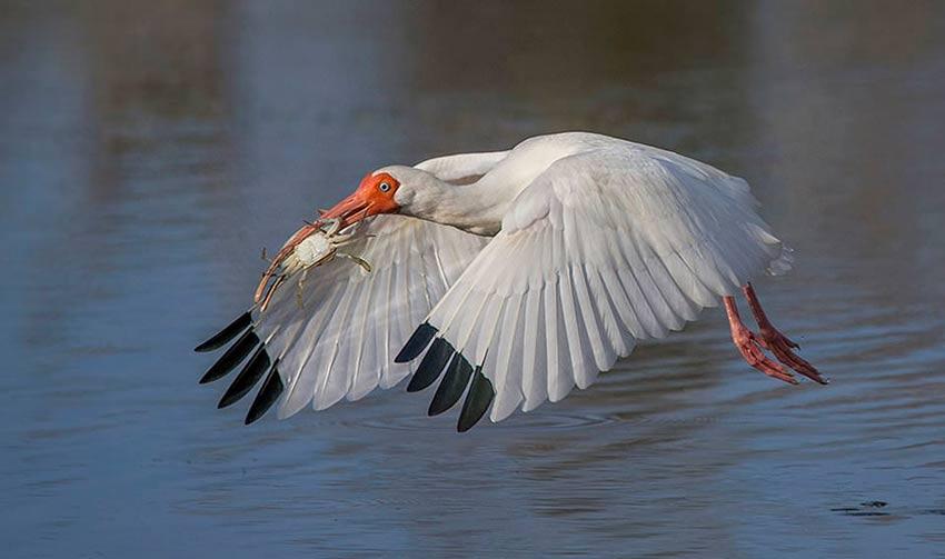 عکاسی از پرندگان در پرواز
