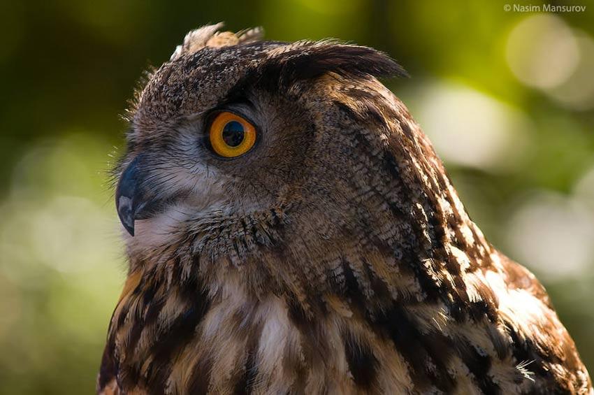نحوه عکاسی از پرندگان